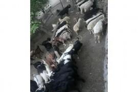 Her bütceye uygun kurbanlık koyun keçi bulunmaktadır