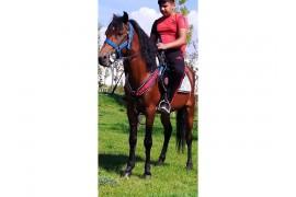 Kaliteli rahvan erkek atım satliktir