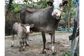 Hayvanlar sıkıntısız verimli yemesi içmesi yerinde