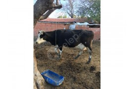 Devren kiralık hayvan çiftliği
