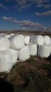 Bol taneli balyeli mısır slaji Balyesi 340 400 kğ geliyor