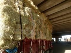 Buğday gorunga yulaf yonca karışık on numara ot
