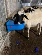 Plastik Şamandıralı Koyun Kuzu Suluğu