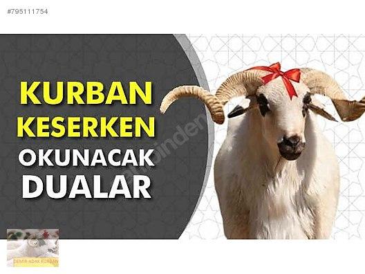 DEMİR ADAK KURBAN